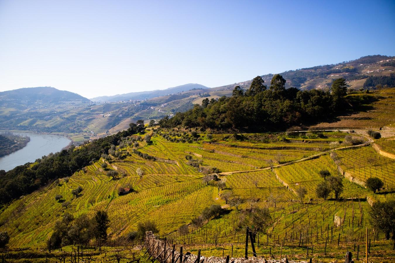 Rota do Douro: vem ver as folhas a mudar de cor!