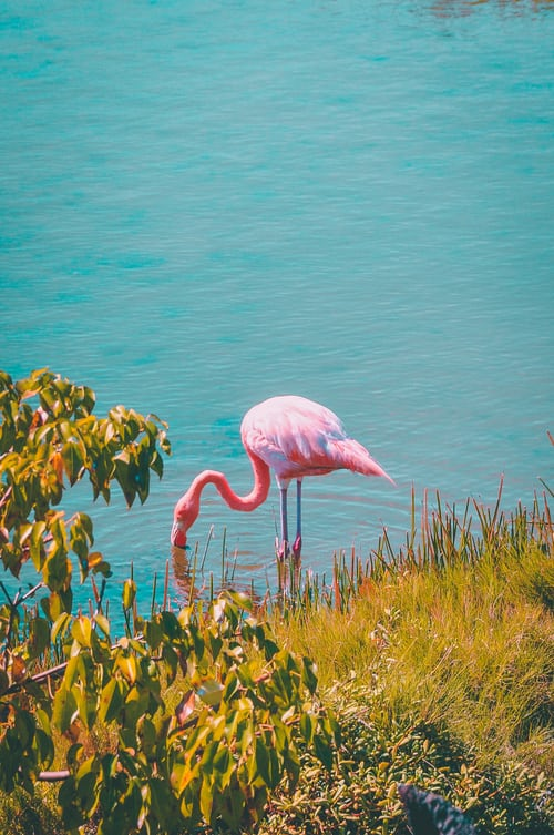 Barcos e Flamingos no Estuário do Tejo